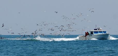 DRNA aclara expresiones realizadas por pescadores del este