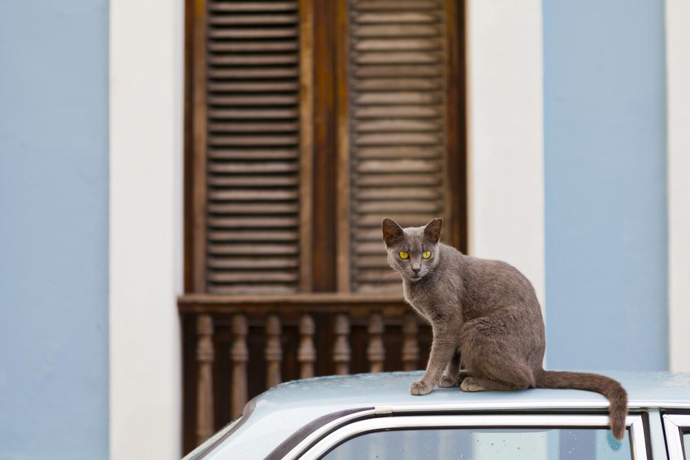 Protección legal a los animales en Puerto Rico