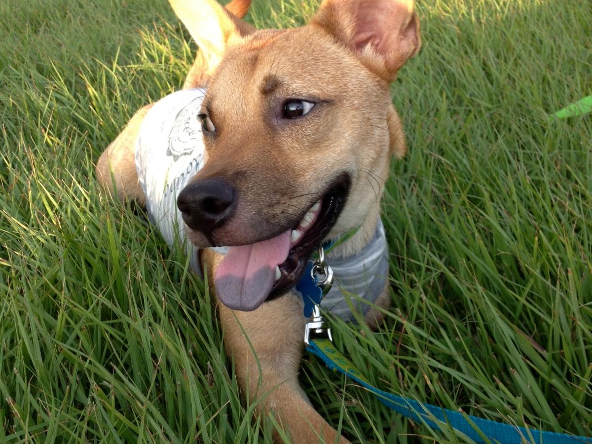 Microjuris participará de Pets @ Work Day