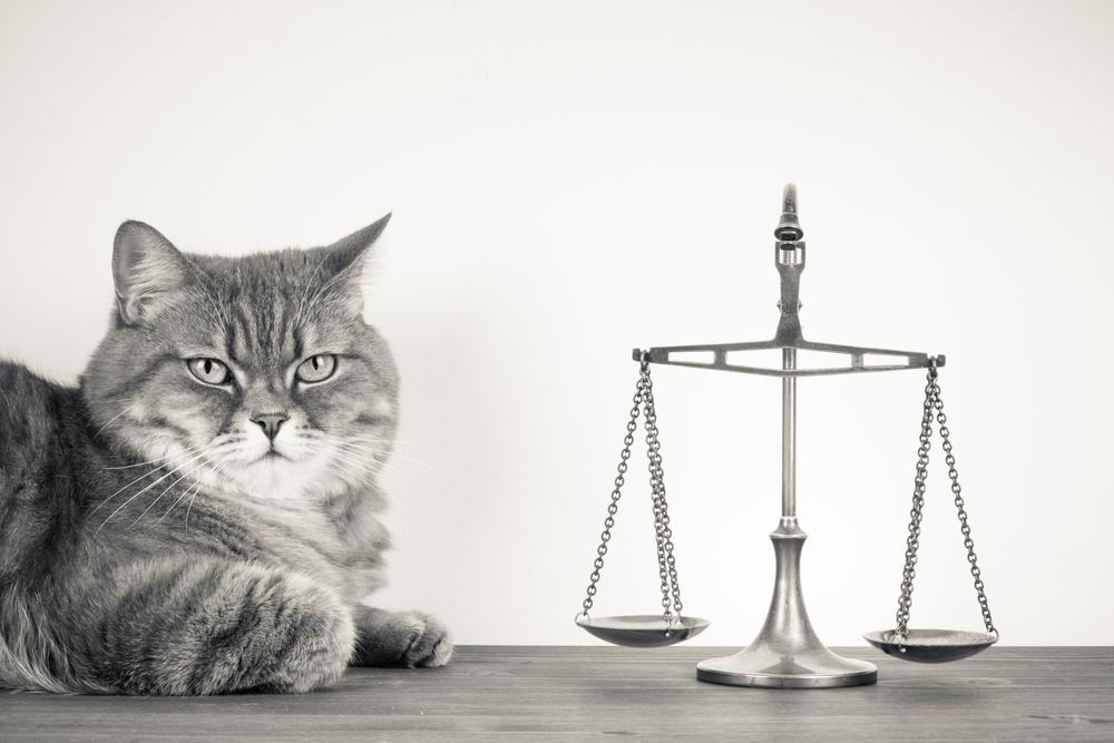 Primera exposición sobre derechos y bienestar de los animales