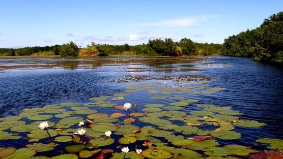 EPA y operadores del vertedero de Arecibo llegan a un acuerdo