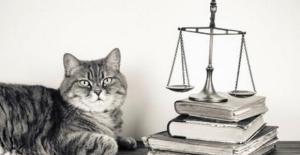 Ley 154 de protección de animales, 6 años más tarde