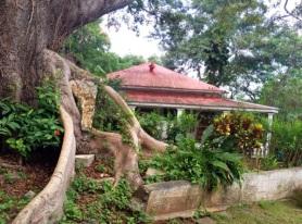 La Ceiba de la Libertad