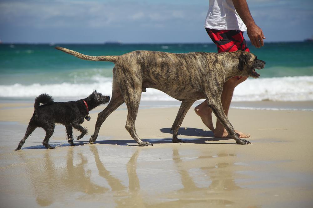 Carolina aclara que no está prohibido pasear mascotas en las playas, error en Código de Orden Público