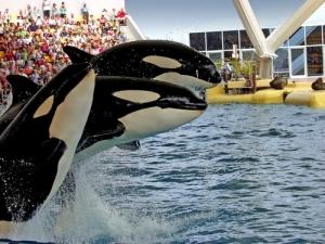 Acusan a SeaWorld de enviar empleado infiltrado a protestas a favor de los animales