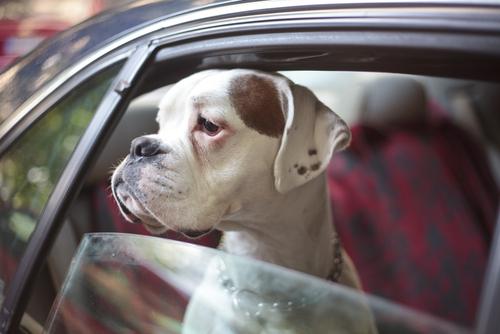 Derecho de los animales: Taller legal abierto