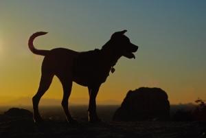 Ciudad requiere que tiendas de mascotas solo vendan animales rescatados