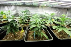 Marihuana Inc. en la Inter Derecho
