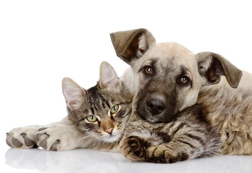 Introducción a la legislación protectora de animales en Derecho PUCPR
