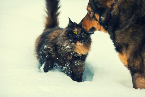 Estado castigará dueños de mascotas que les dejan expuestos al frío y calor