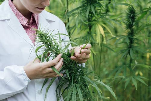 La marihuana ante el Congreso