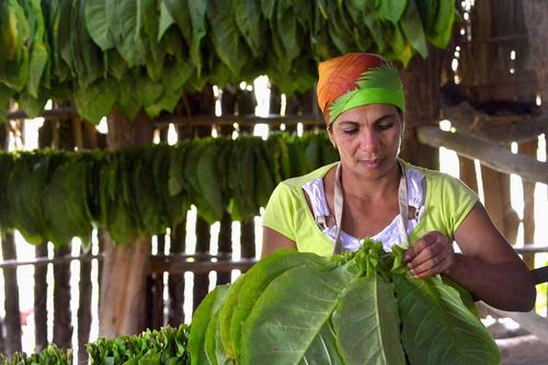 Secretario Agricultura federal y homólogo cubano visitarán Puerto Rico en mayo