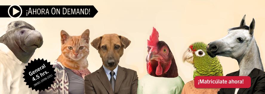 ¿Tienen derechos los animales? Política pública, leyes y jurisprudencia