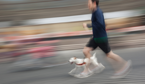 Estudiantes de Derecho de la Pontificia invitan a 3K canino en Ponce
