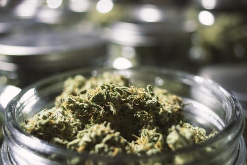 Ex fiscal de Colorado ofrecerátaller en Puerto Rico sobre legalización de marihuana ypolítica pública
