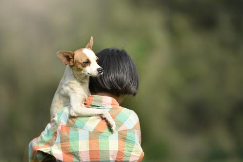 Libre de responsabilidad por daños quien rescate menor o animal encerrado en automóvil