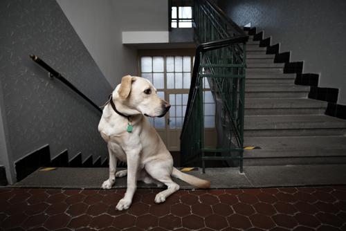 Condominio discriminó contra paciente de depresión al no permitirle tener perro terapéutico en su apartamento