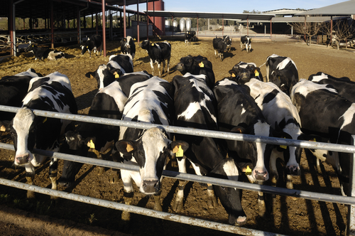 Got Milk? Bankruptcy Petitions under Chapter 12