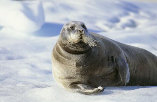 Especies pueden categorizarse como protegidas a base del cambio climático, según Noveno Circuito