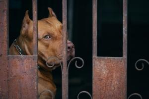 ¿Qué dicen las plataformas de los partidos políticos y candidatos independientes acerca de los derechos de animales?