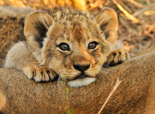 Cámara de Representantes investigará muerte de animales en el Zoológico de Mayagüez