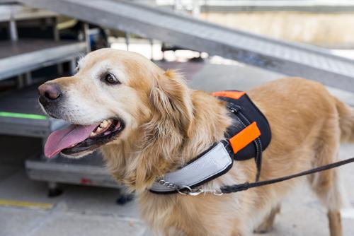 Tribunal Supremo falla a favor de niña que deseaba llevar su can de servicio a la escuela