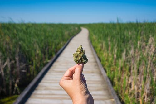 Presentan proyecto en Cámara que baja penas por posesión de marihuana