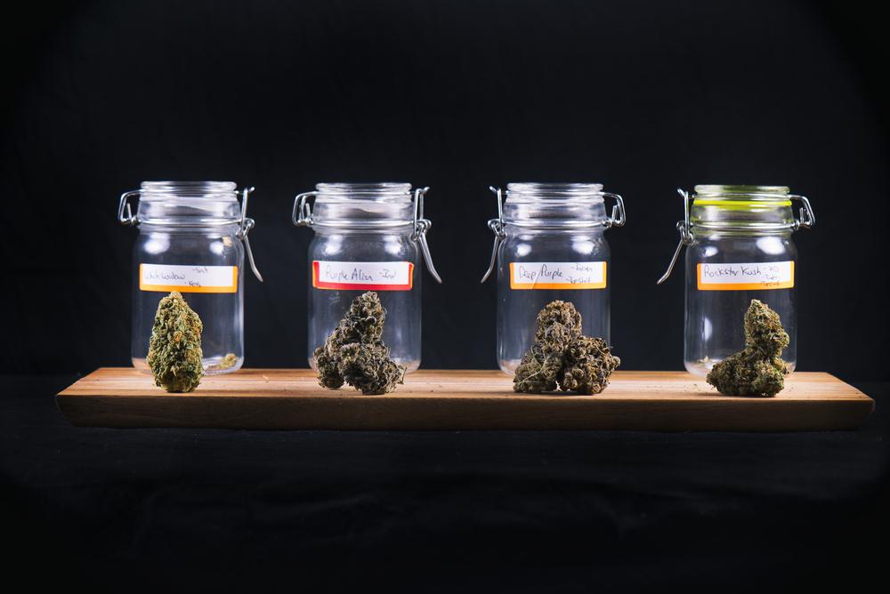 Sigue cobrando fuerza industria del cannabis medicinal