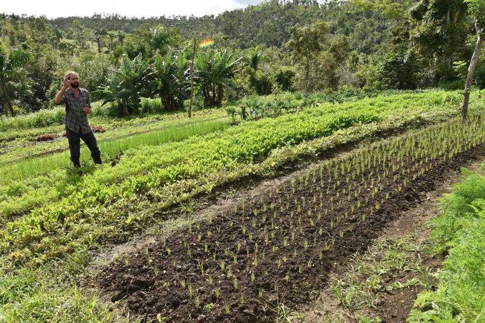 Centro del Cambio Climático del Caribe y la Oficina del Bosque Modelo capacitan a agricultores para enfrentar eventos climáticos extremos