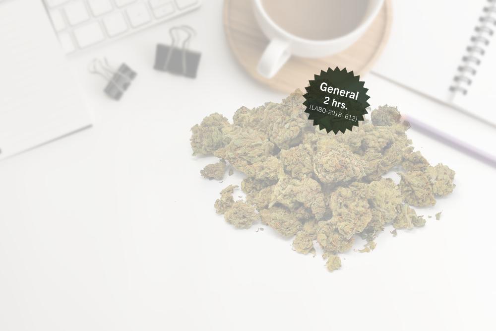 ¿Marihuana en la oficina? Consideraciones legales y prácticas del cannabis medicinal en el contexto laboral privado