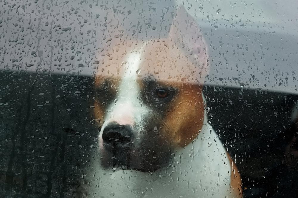Senador procura crear Ley de Refugios de Animales durante Emergencias o Desastres Naturales