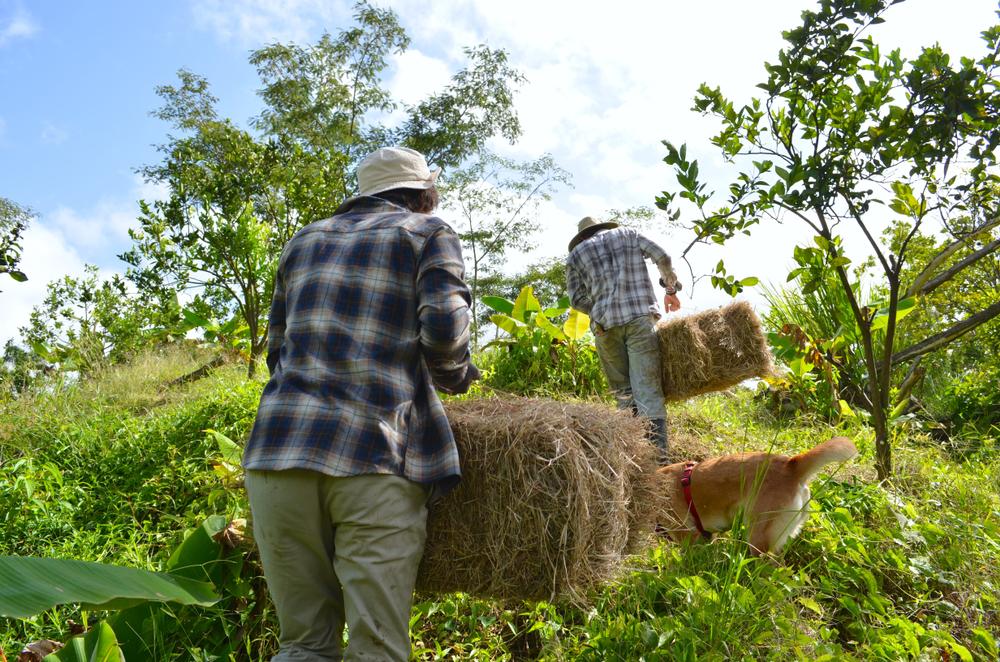Firman ley de exención de arbitrios de forma directa al agricultor bona fide
