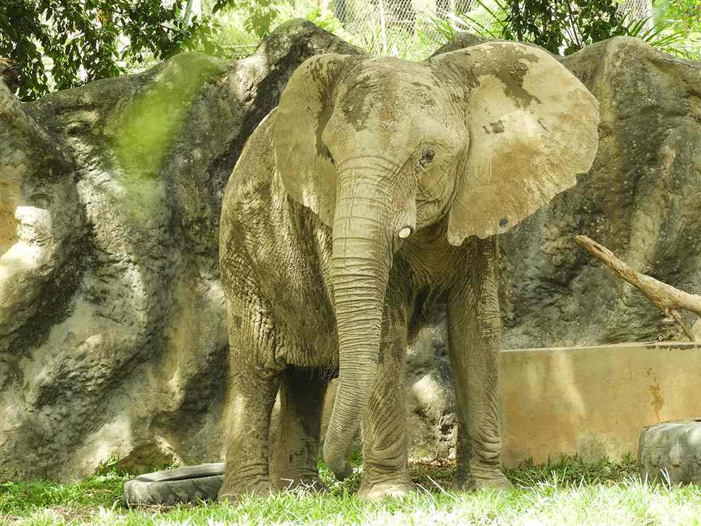 Mundi el elefante