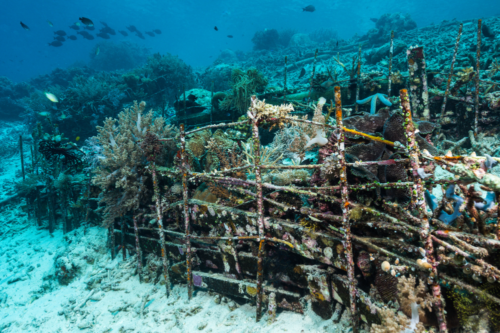 arrecife artificial
